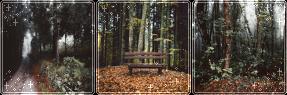 F2U|Decor|Autumn Forest #3 by Mairu-Doggy