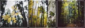 F2U|Decor|Autumn Forest by Mairu-Doggy