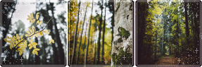 F2U|Decor|Autumn Forest by Mairu-Doggy