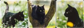 F2U|Decor|Blackie