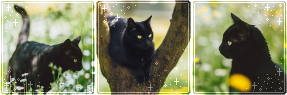 F2U|Decor|Blackie by Mairu-Doggy