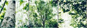 F2U|Decor|Green Beauty #2