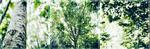 F2U|Decor|Green Beauty #2 by Mairu-Doggy