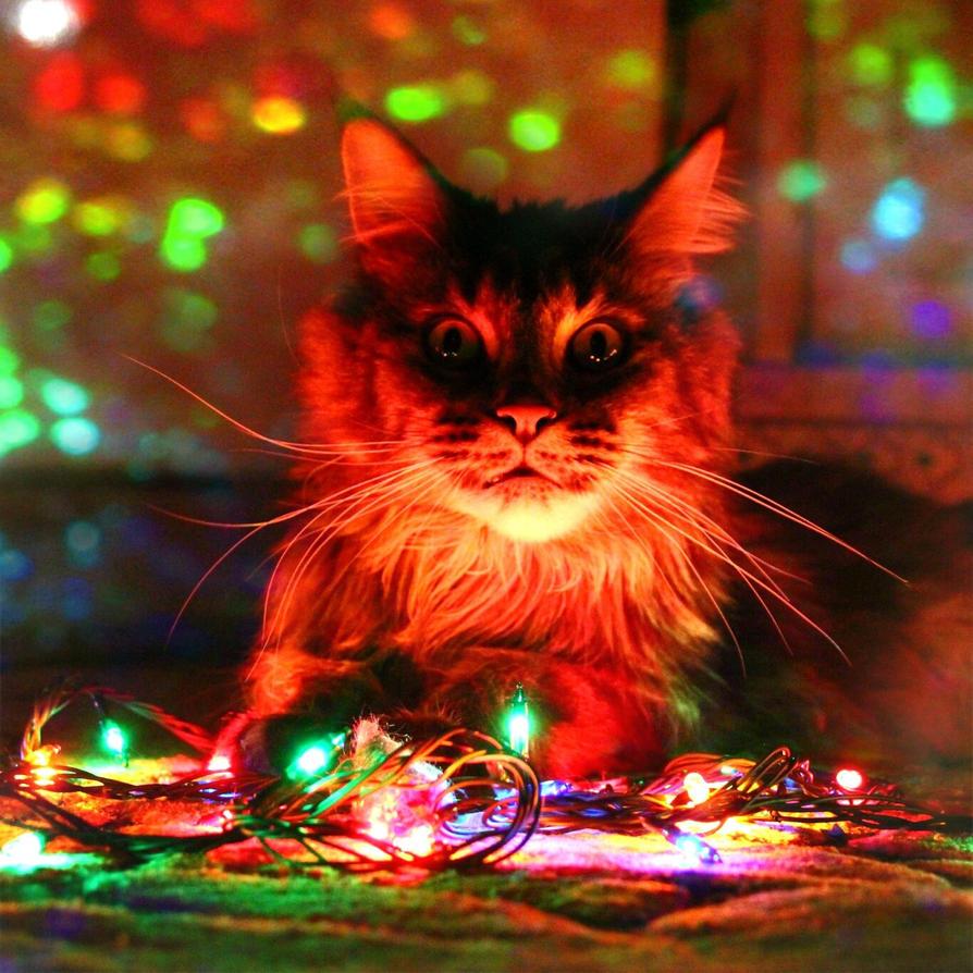 merry christmas by NikaSamarina