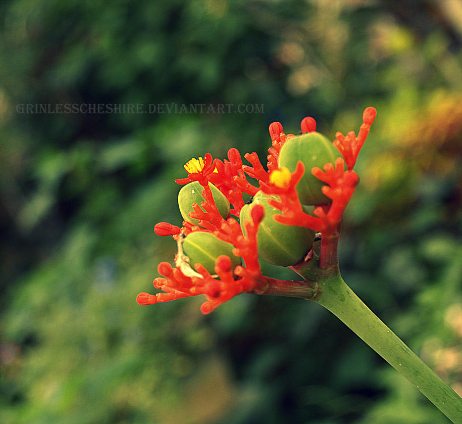Cypress Gardens XVII by PixiePoxPhotography