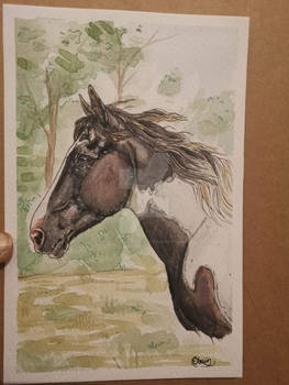 A5 water colour commission