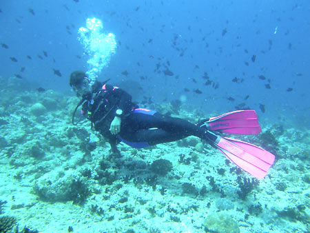 fuchsiart's Profile Picture