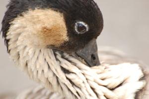 WanderingAlbatross's Profile Picture