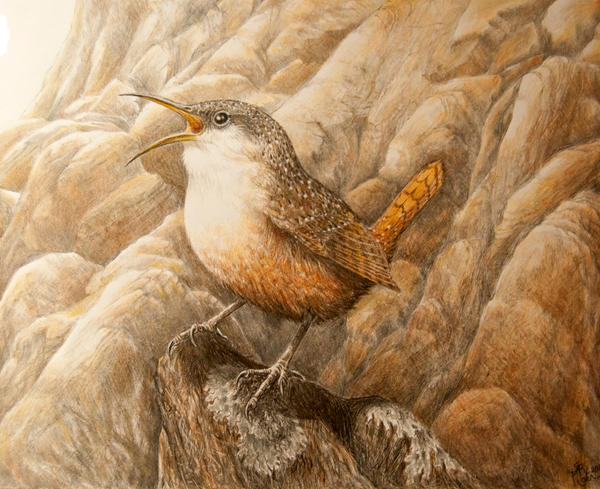 Canyon Wren by WanderingAlbatross
