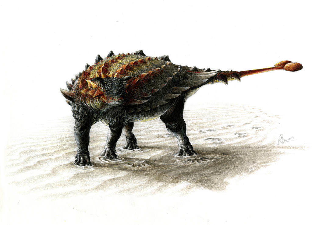 Ziapelta sanjuanensis by WanderingAlbatross