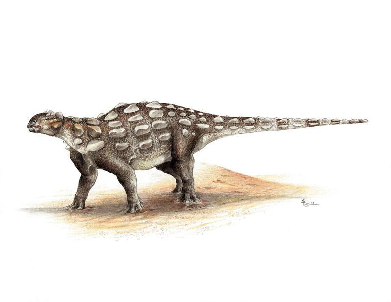 Gobisaurus domoculus by WanderingAlbatross