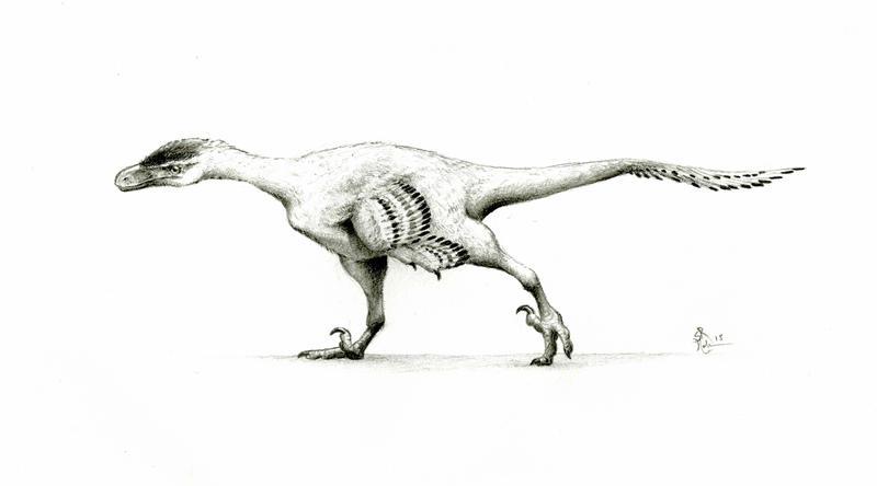 Dromaeosaurid by WanderingAlbatross