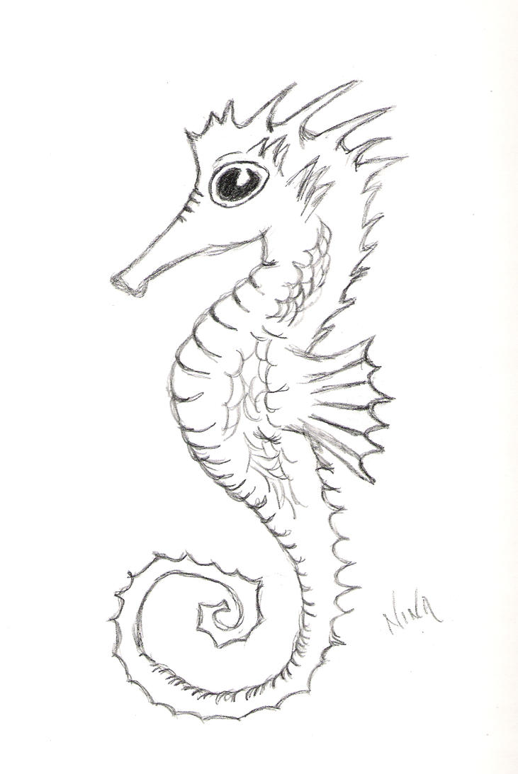 Seahorse wip by flina on deviantart for How to draw a simple seahorse