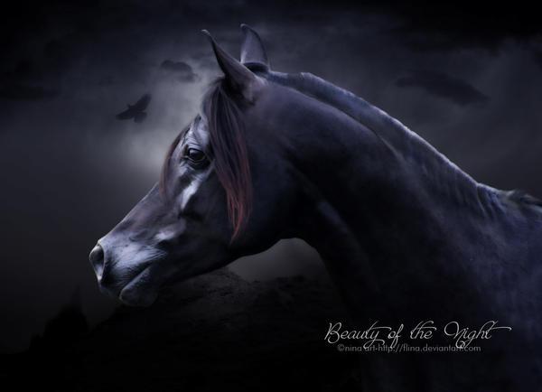 Beauty of the Night by flina