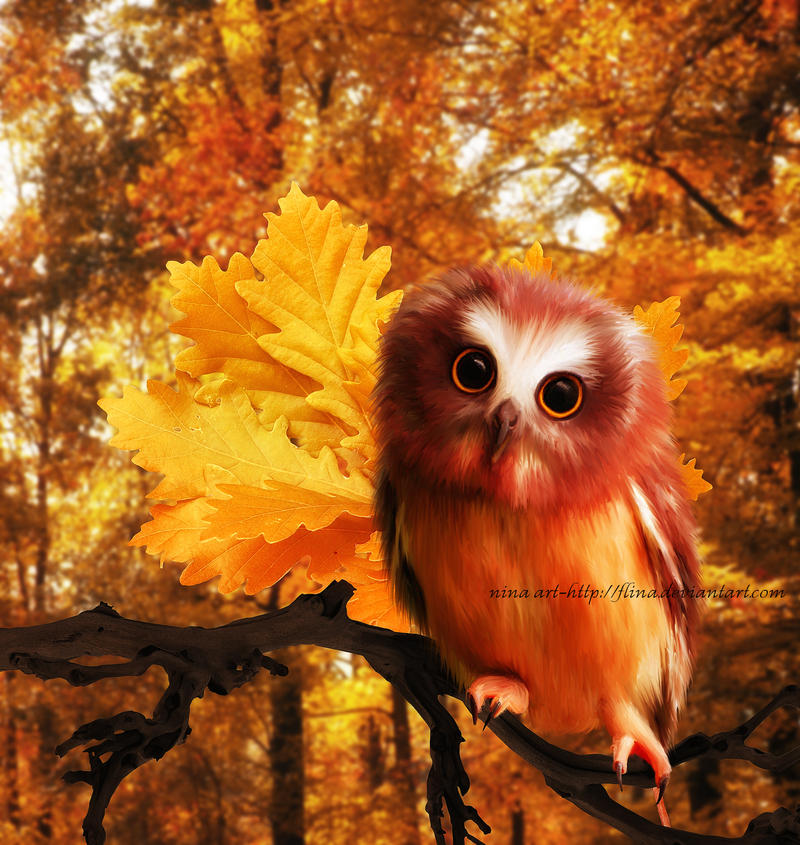 Little Owlie by flina