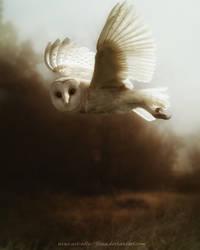 Owl II by flina