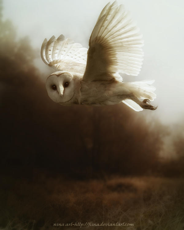 Owl II by flina