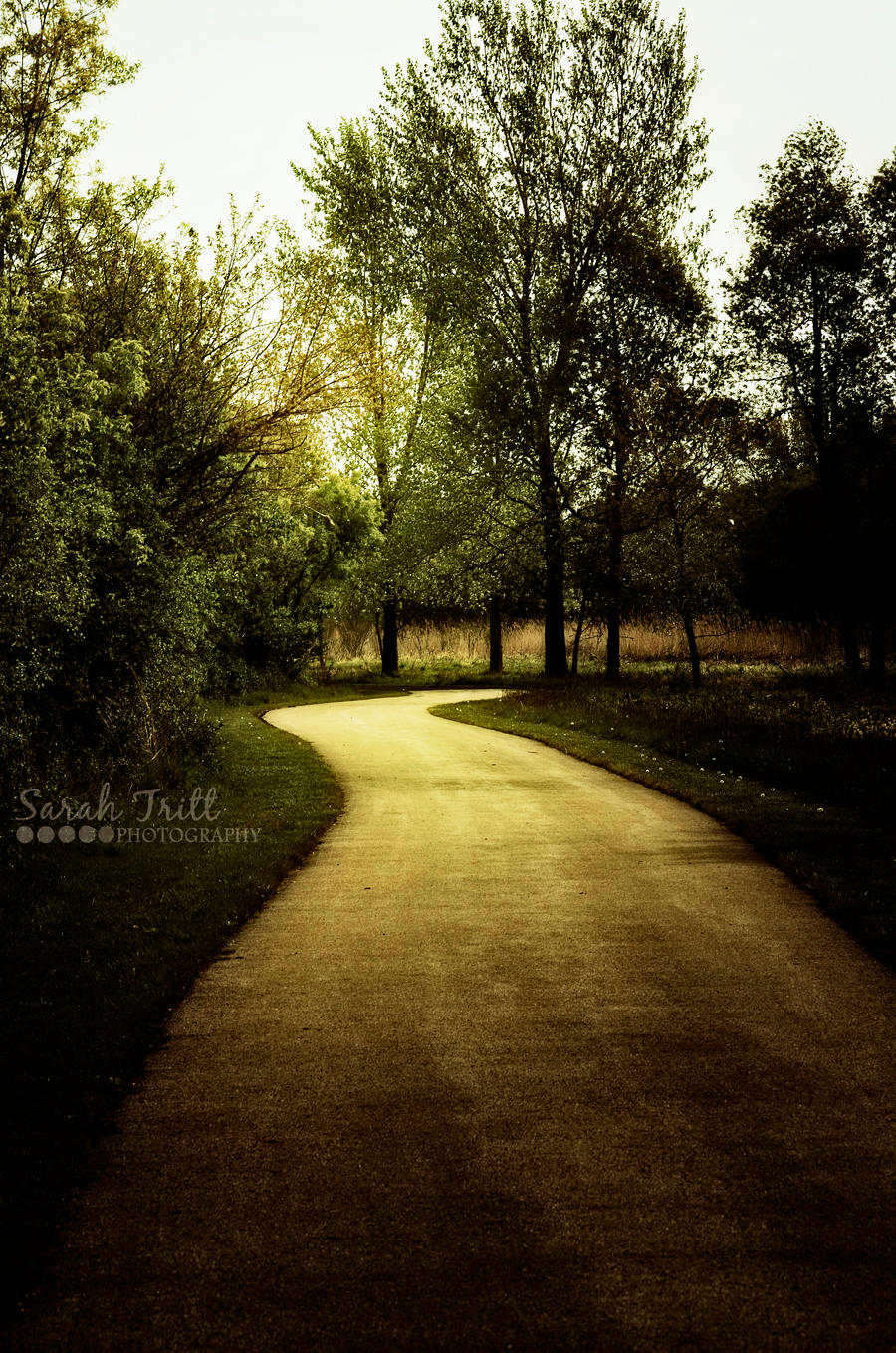 Golden Road by SarahSunshine819