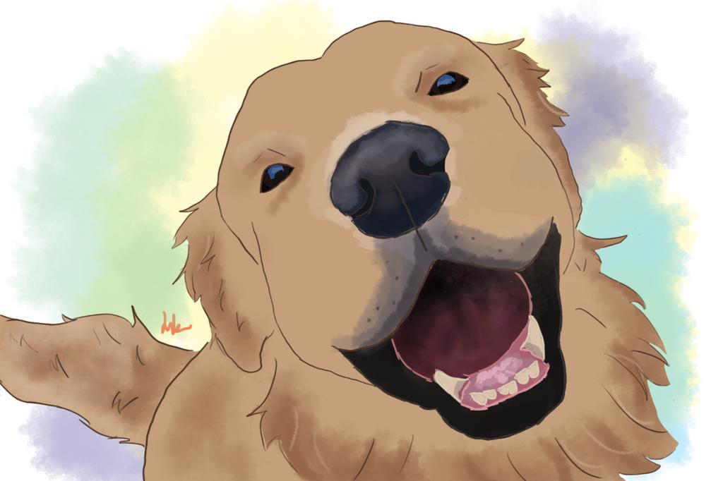 Excited | Doggo by Brownielonglegs