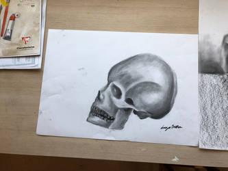 A variety of skulls (practice drawings) by Brownielonglegs