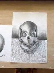 A variety of skulls 2 (practice drawings) by Brownielonglegs