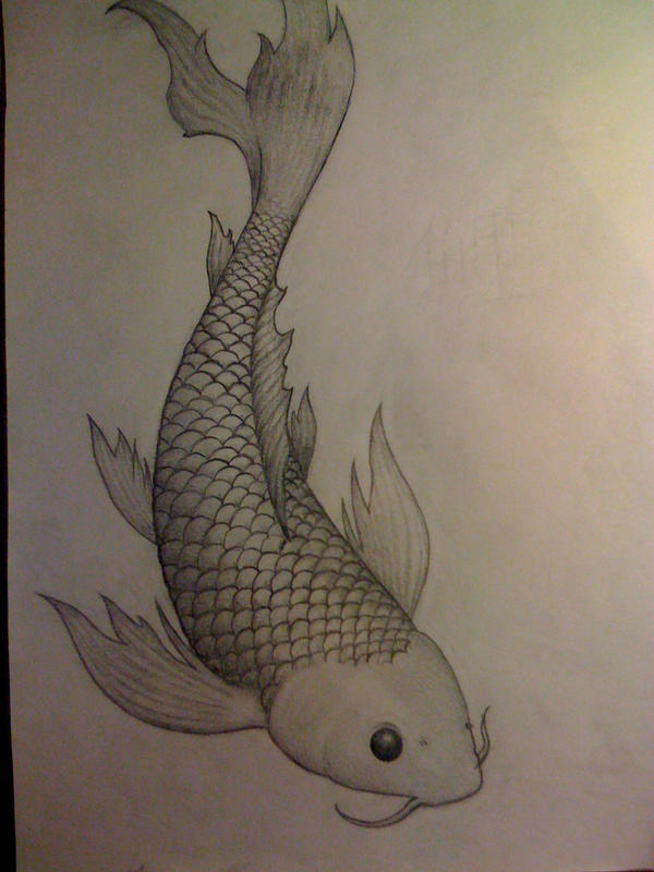Butterfly koi by drake 06 on deviantart for Butterfly koi tattoo
