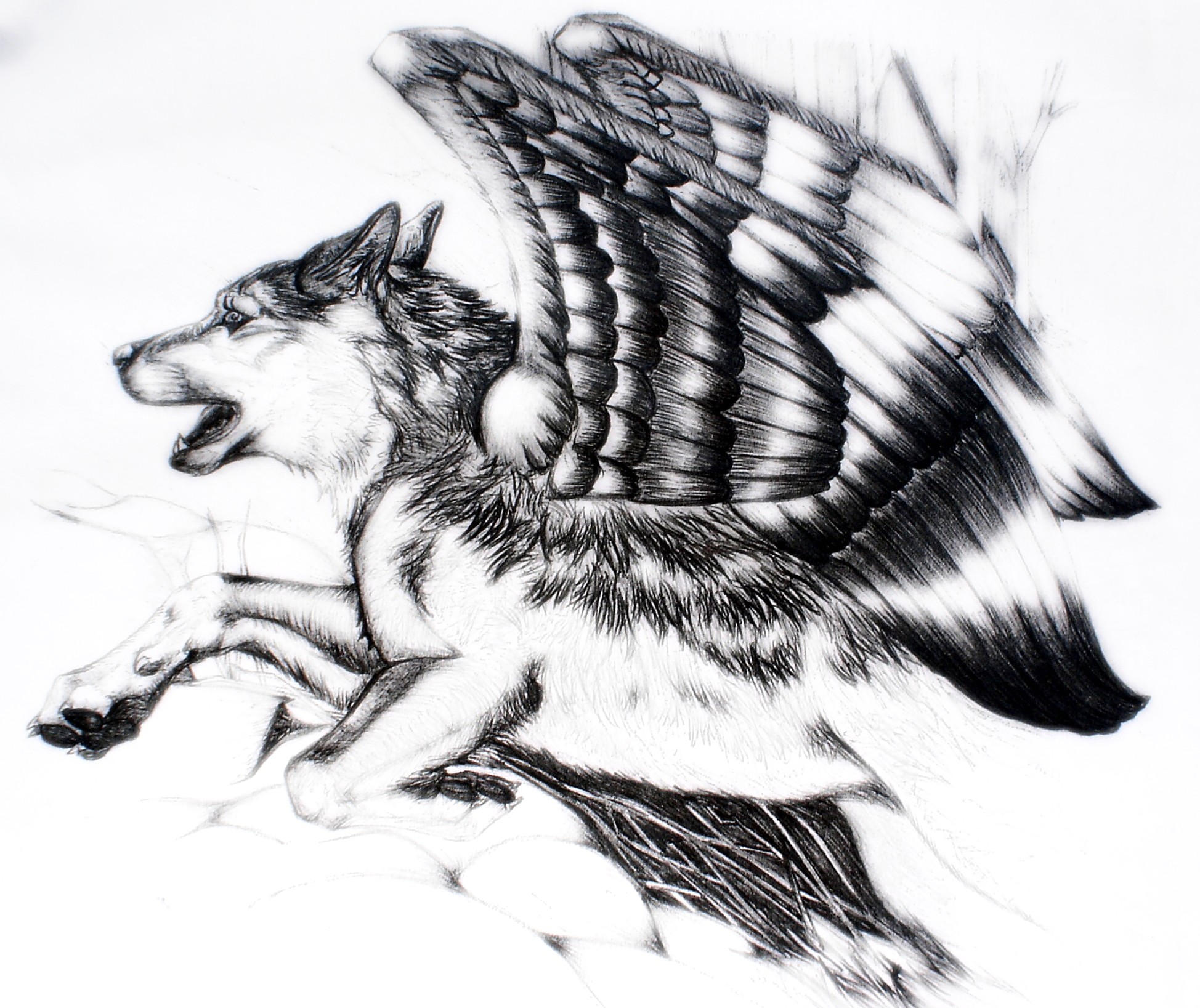 How To Draw Wolf Tails Photo#20 Wolf S Wings By 1948