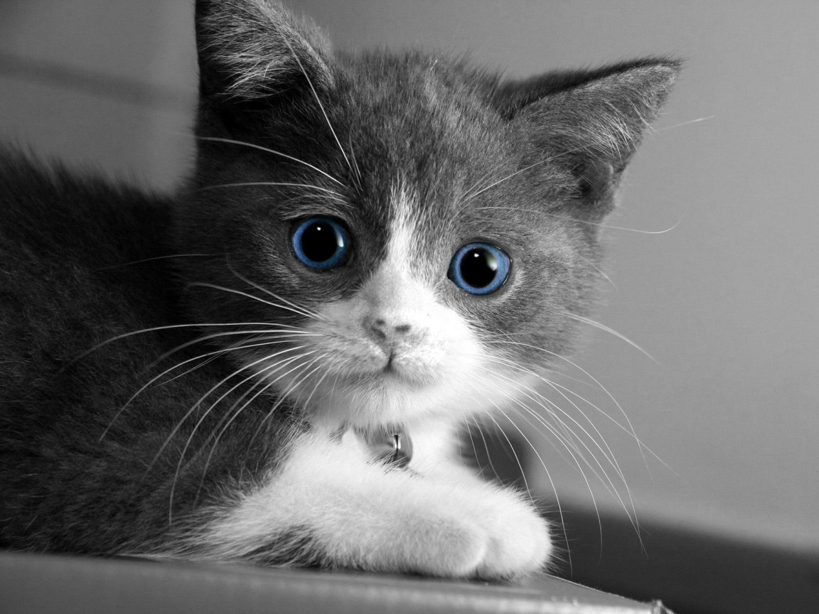 Baby Cat Don T Be Shy By Turkiye2009 On Deviantart