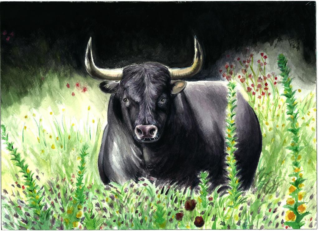 Bull in the field by king-ghidorah