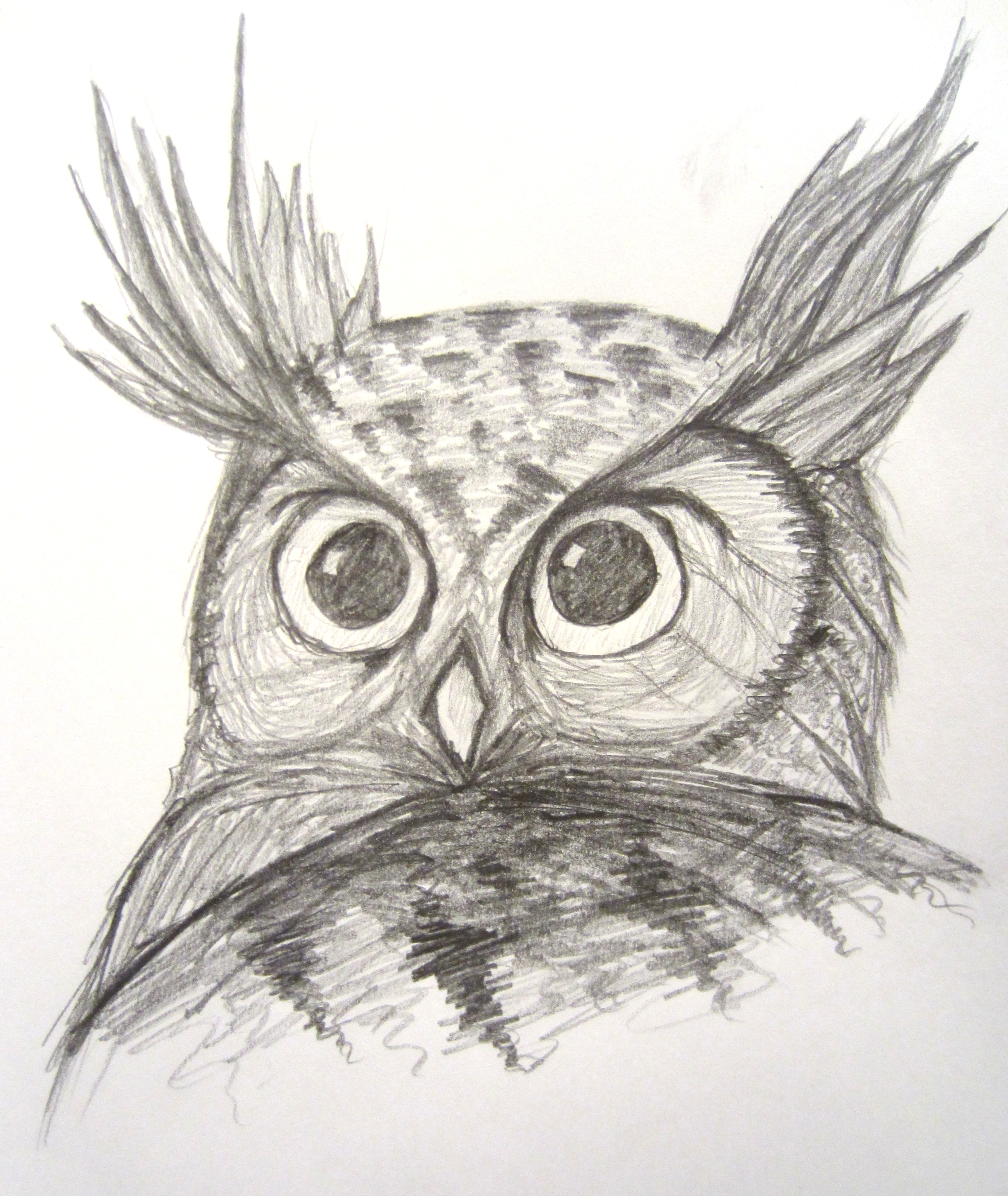 how to draw a horned owl