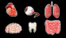 Pixel Organs by ChuraGhost