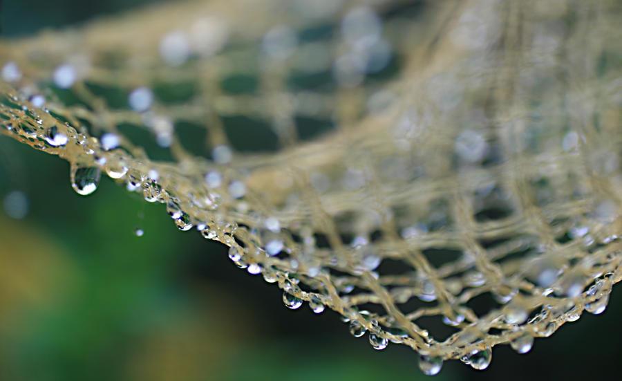 Wet Net by artstarter