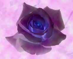 Rose by artstarter