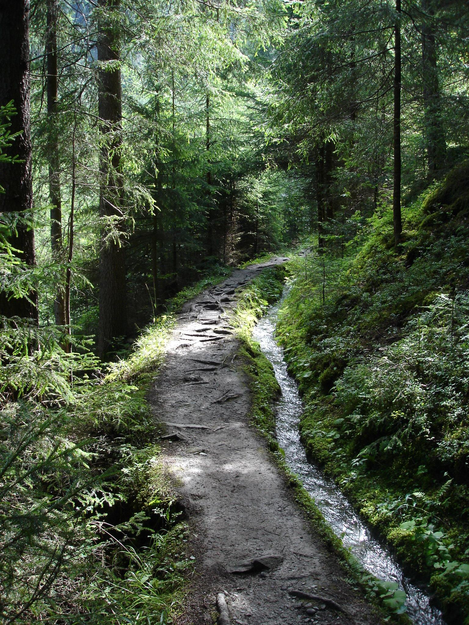 http://fc02.deviantart.com/fs19/f/2007/301/6/4/one_path____by_p3aNutBuTTer.jpg