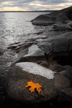 Leaving the autumn