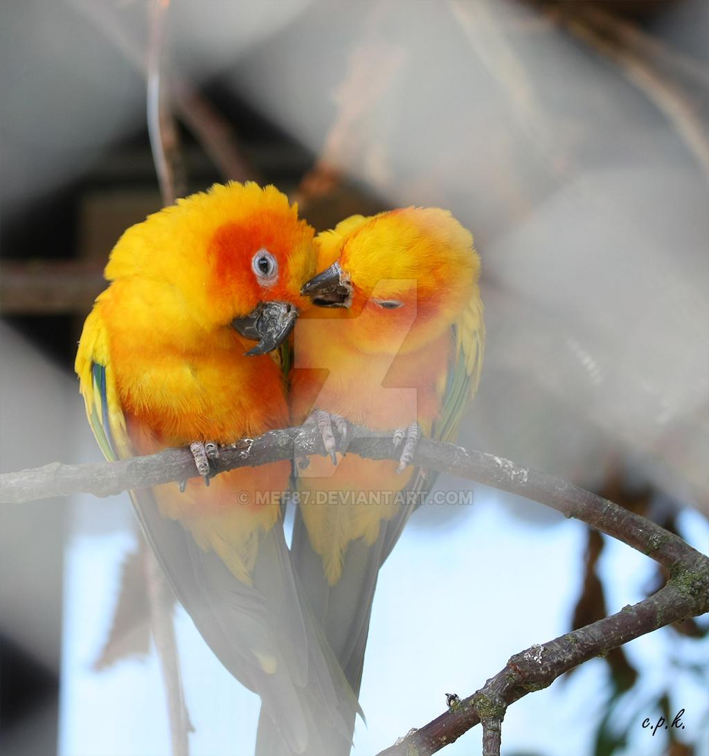 birds in love by mef87