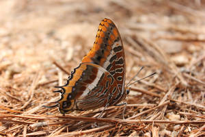 A butterfly by Andre-anz