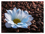 White coffee I