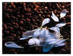 White coffee II