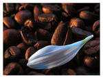 White coffee III