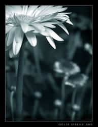 white by Emielcia