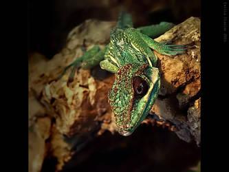 dragon by Emielcia