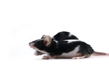 Rat race by Emielcia