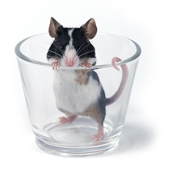 another... glass of... mouse by Emielcia