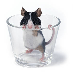 another... glass of... mouse