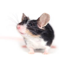 just mouse by Emielcia