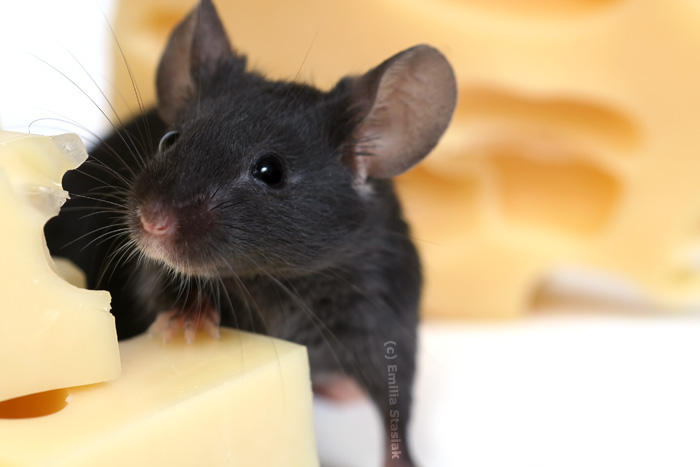 mice paradise by Emielcia