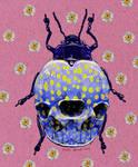 Skull Beetle
