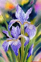 Iris by Ezeg