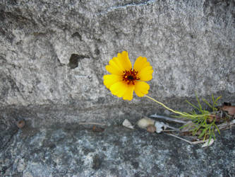 Flower in the concrete by VampireThe-Shadow